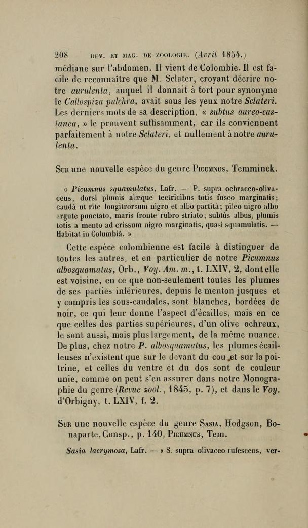 Sur une Nouvelle espece du Genre Picumnus, Temminck